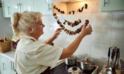 jak suszyć grzyby